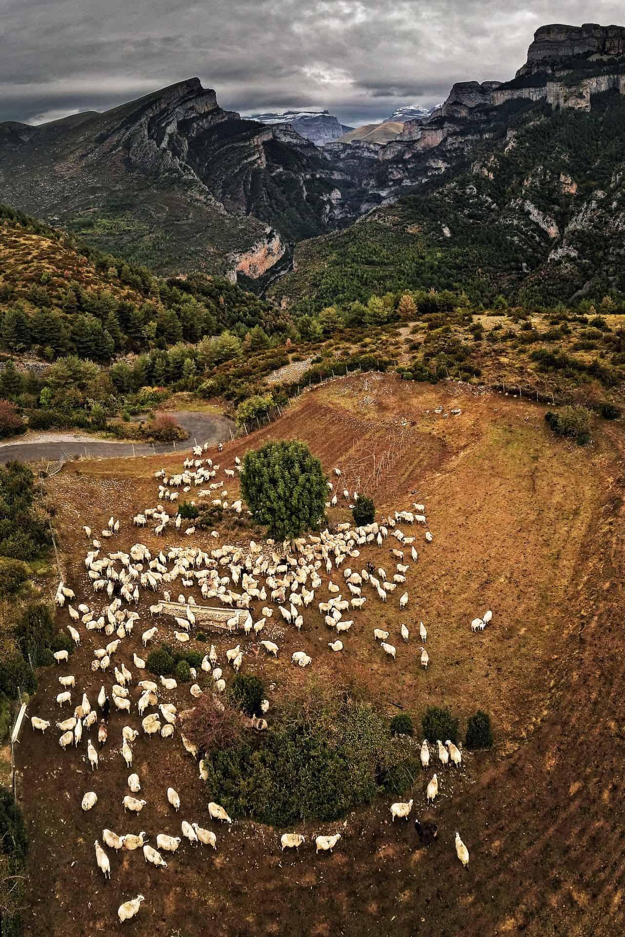 Canyon d'Añisclo